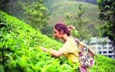 Чайный тур на Шри-Ланку: совмещаем приятное с полезным